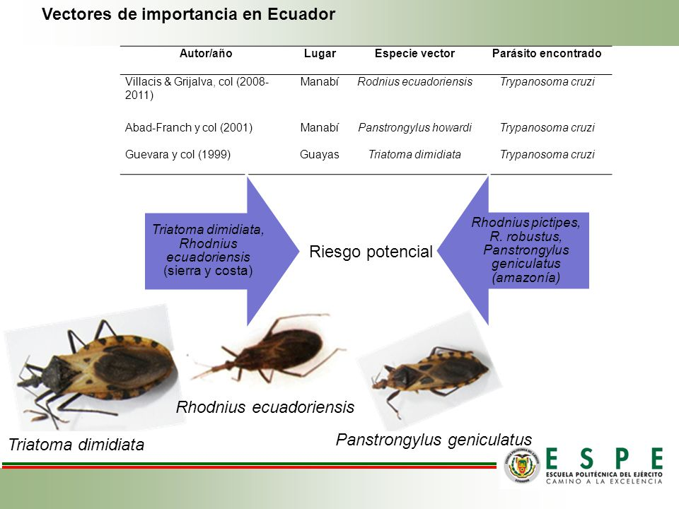 Vectores de importancia en Ecuador