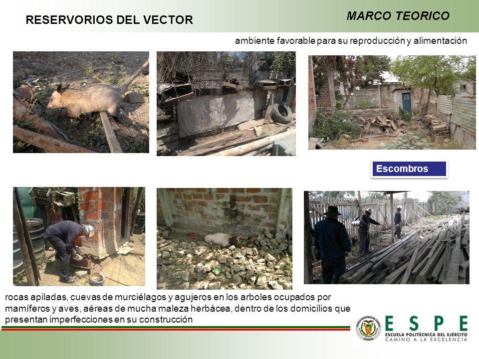RESERVORIOS DEL VECTOR