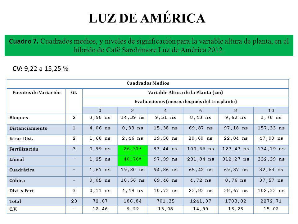 LUZ DE AMÉRICA