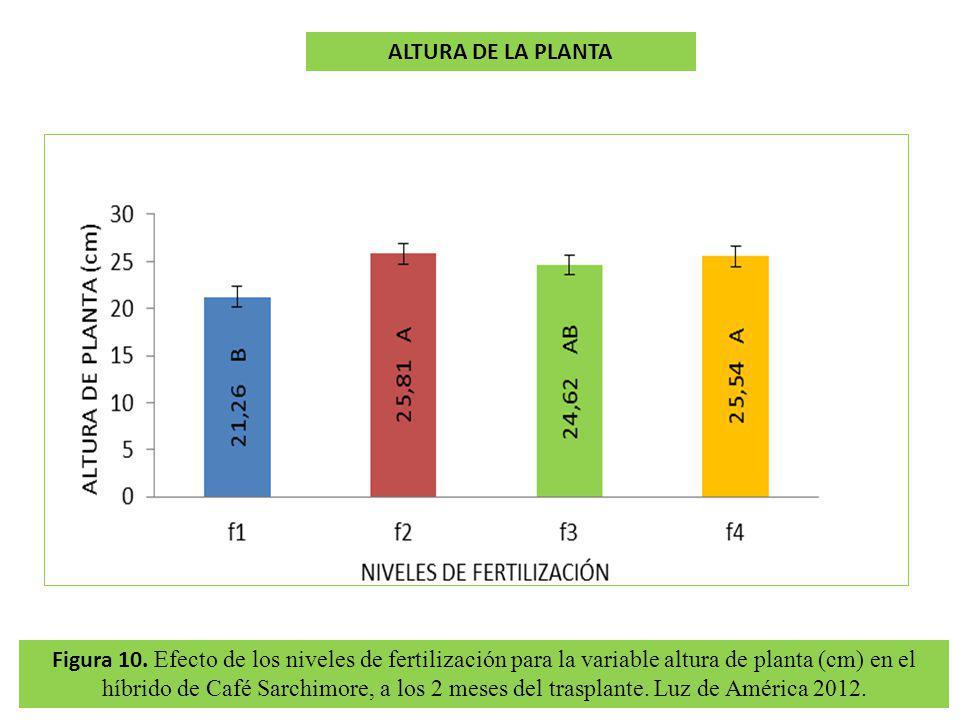 ALTURA DE LA PLANTA