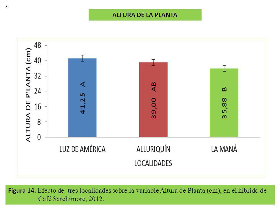 * ALTURA DE LA PLANTA. Figura 14.