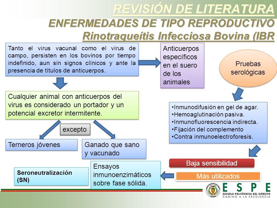 REVISIÓN DE LITERATURA ENFERMEDADES DE TIPO REPRODUCTIVO Rinotraqueítis Infecciosa Bovina (IBR