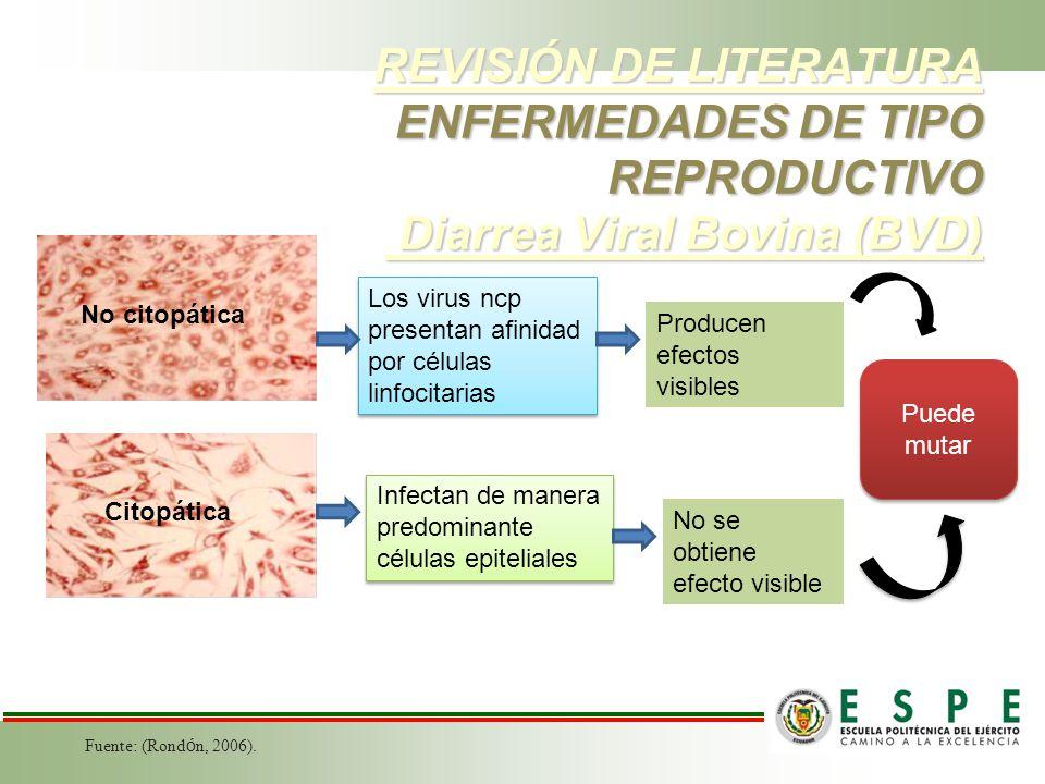 REVISIÓN DE LITERATURA ENFERMEDADES DE TIPO REPRODUCTIVO Diarrea Viral Bovina (BVD)