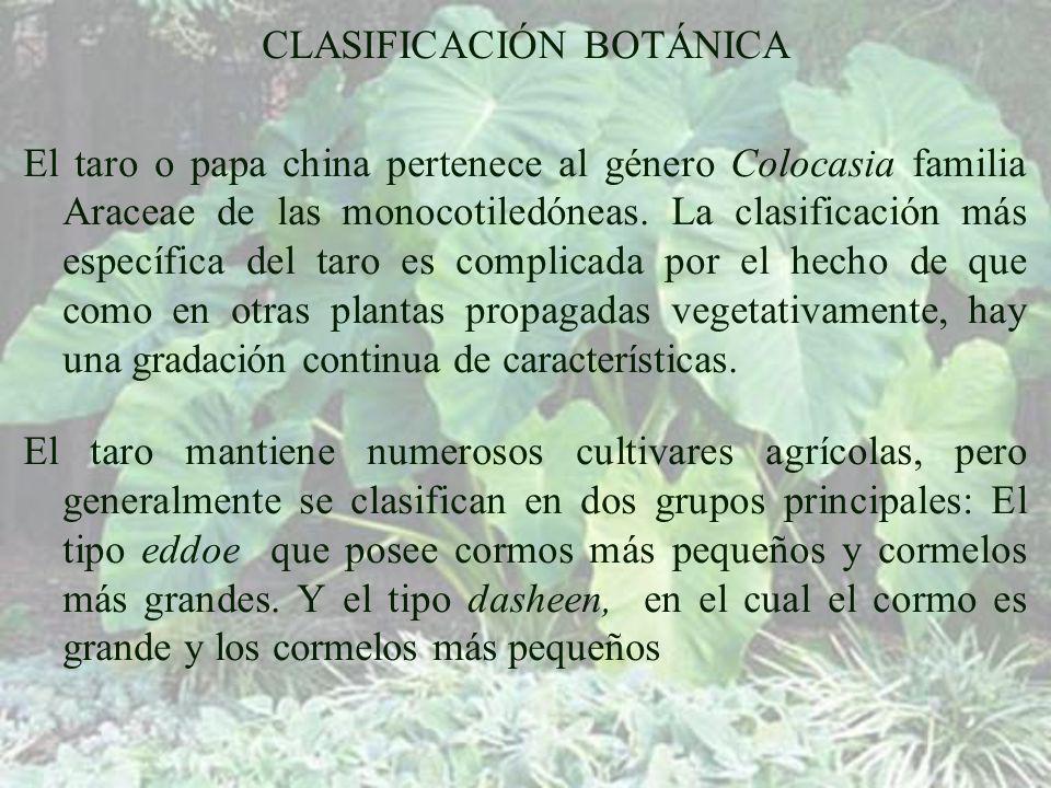 CLASIFICACIÓN BOTÁNICA