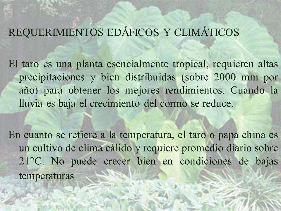 REQUERIMIENTOS EDÁFICOS Y CLIMÁTICOS