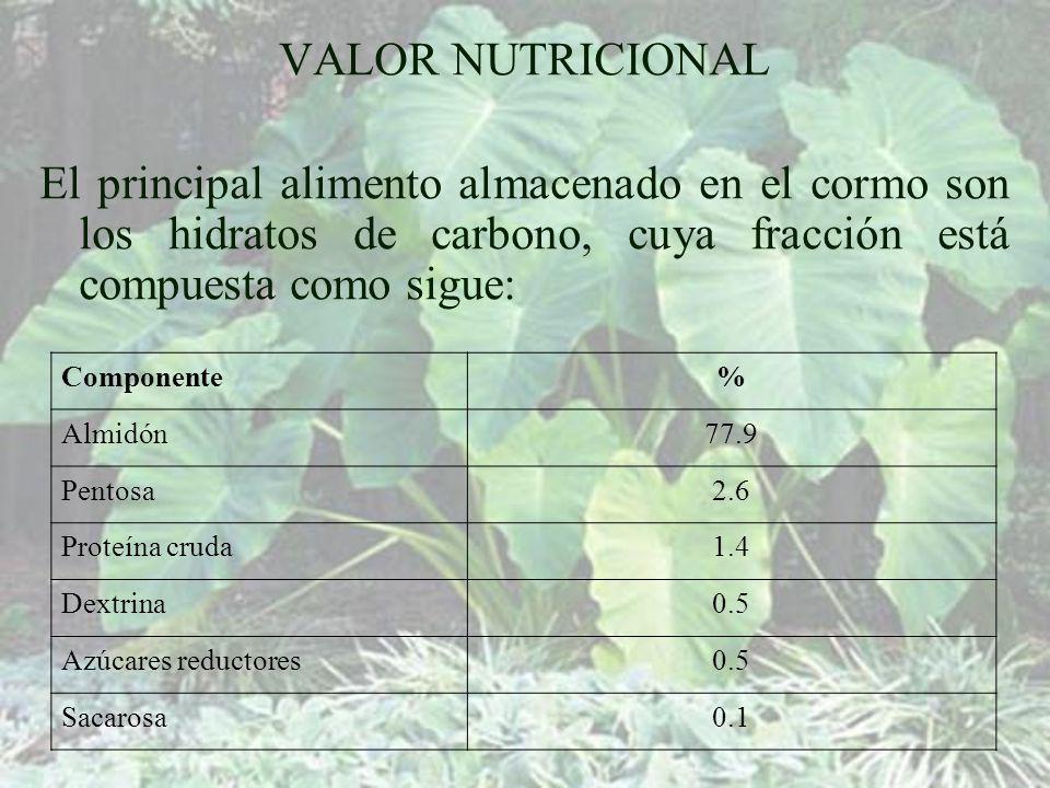 VALOR NUTRICIONAL El principal alimento almacenado en el cormo son los hidratos de carbono, cuya fracción está compuesta como sigue: