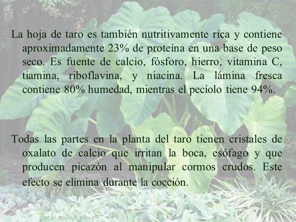 La hoja de taro es también nutritivamente rica y contiene aproximadamente 23% de proteína en una base de peso seco. Es fuente de calcio, fósforo, hierro, vitamina C, tiamina, riboflavina, y niacina. La lámina fresca contiene 80% humedad, mientras el pecíolo tiene 94%.