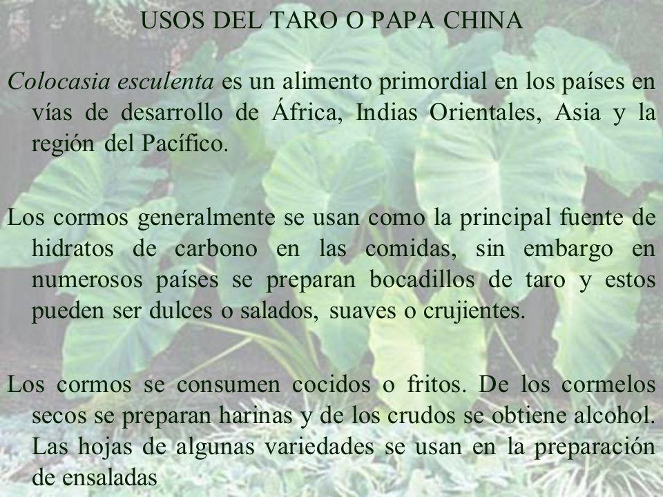 USOS DEL TARO O PAPA CHINA