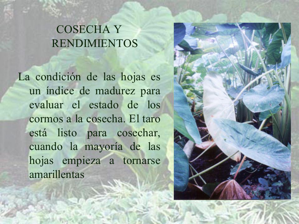 COSECHA Y RENDIMIENTOS