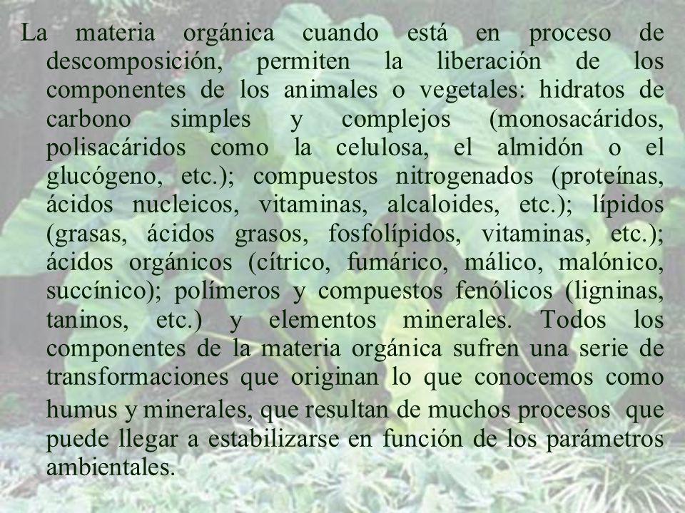 La materia orgánica cuando está en proceso de descomposición, permiten la liberación de los componentes de los animales o vegetales: hidratos de carbono simples y complejos (monosacáridos, polisacáridos como la celulosa, el almidón o el glucógeno, etc.); compuestos nitrogenados (proteínas, ácidos nucleicos, vitaminas, alcaloides, etc.); lípidos (grasas, ácidos grasos, fosfolípidos, vitaminas, etc.); ácidos orgánicos (cítrico, fumárico, málico, malónico, succínico); polímeros y compuestos fenólicos (ligninas, taninos, etc.) y elementos minerales.