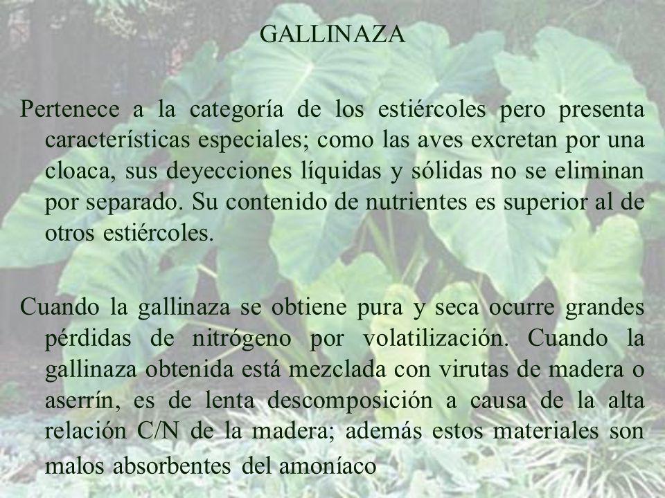 GALLINAZA