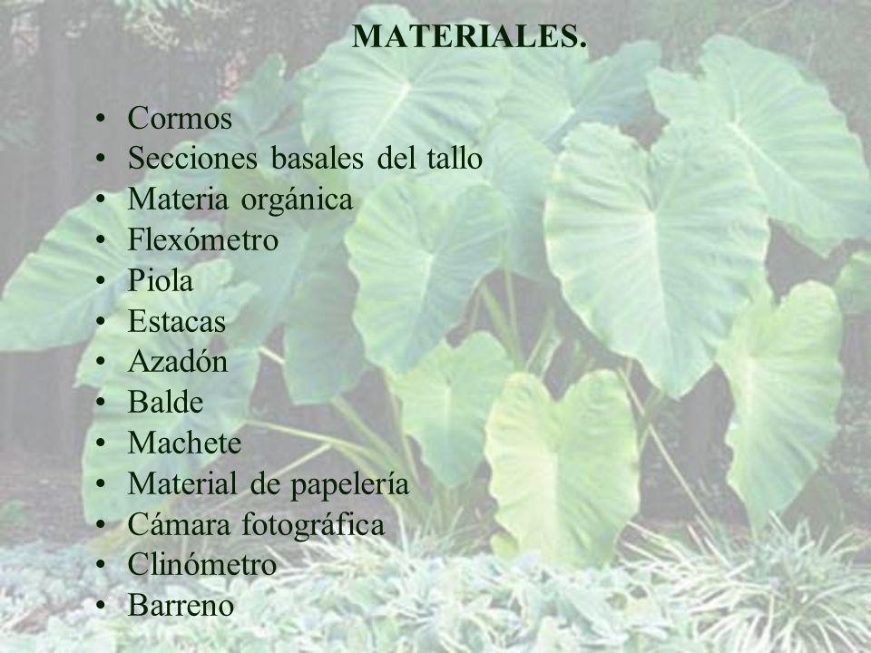 MATERIALES. Cormos. Secciones basales del tallo. Materia orgánica. Flexómetro. Piola. Estacas.