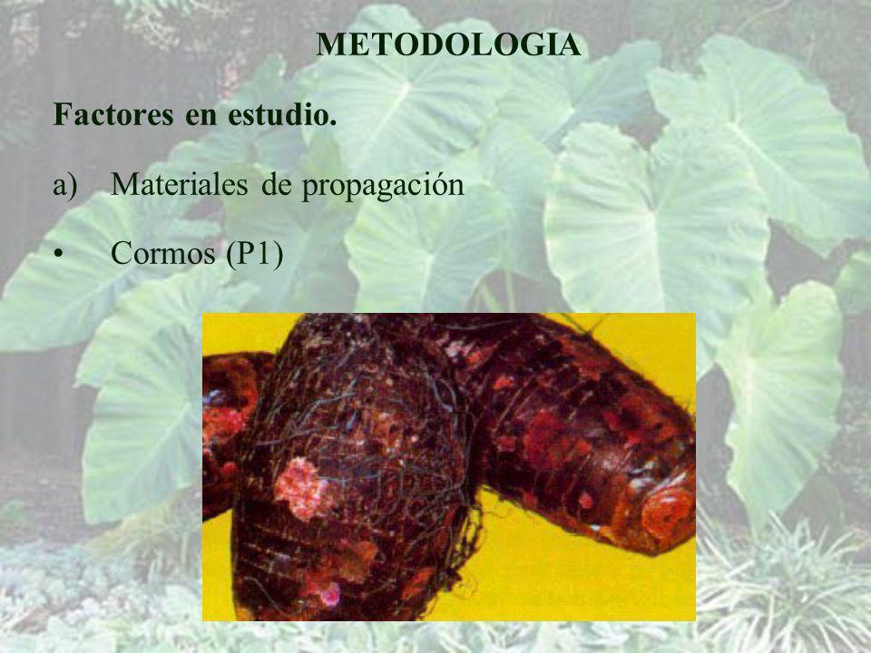 METODOLOGIA Factores en estudio. Materiales de propagación Cormos (P1)