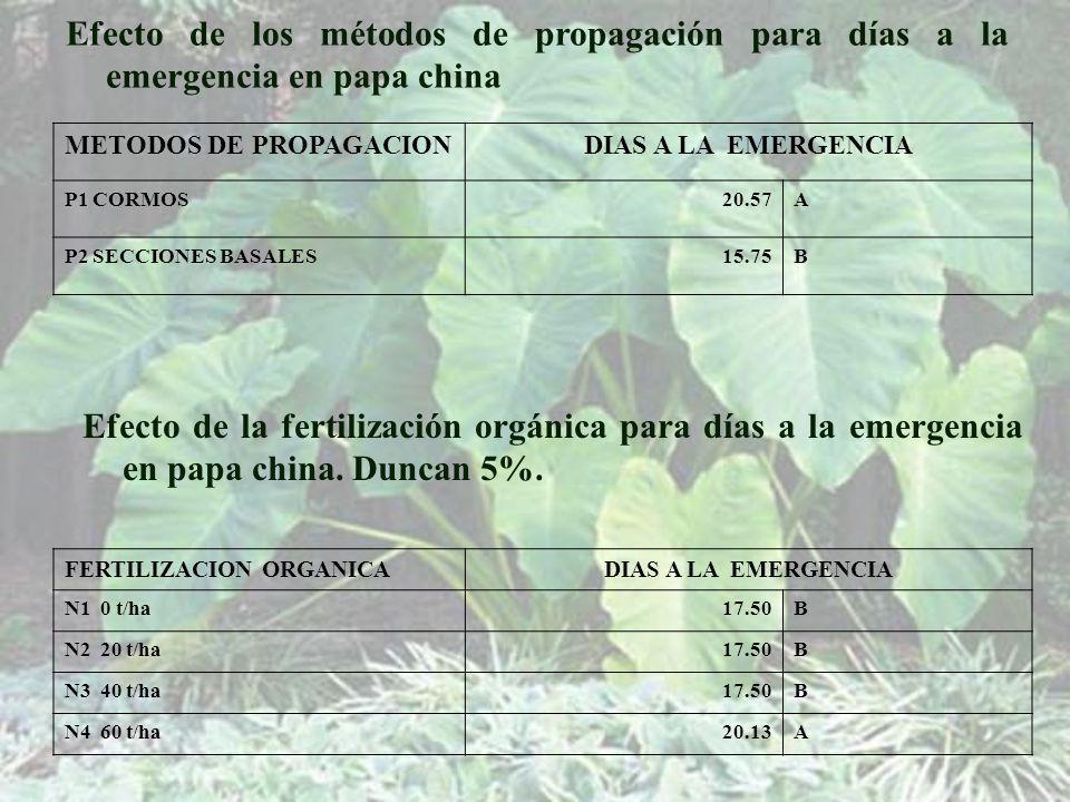 Efecto de los métodos de propagación para días a la emergencia en papa china