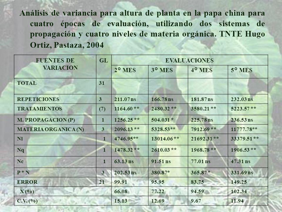 Análisis de variancia para altura de planta en la papa china para cuatro épocas de evaluación, utilizando dos sistemas de propagación y cuatro niveles de materia orgánica. TNTE Hugo Ortiz, Pastaza, 2004