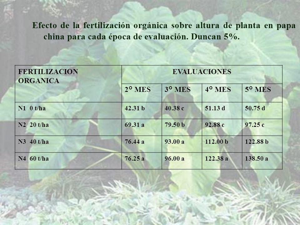 Efecto de la fertilización orgánica sobre altura de planta en papa china para cada época de evaluación. Duncan 5%.