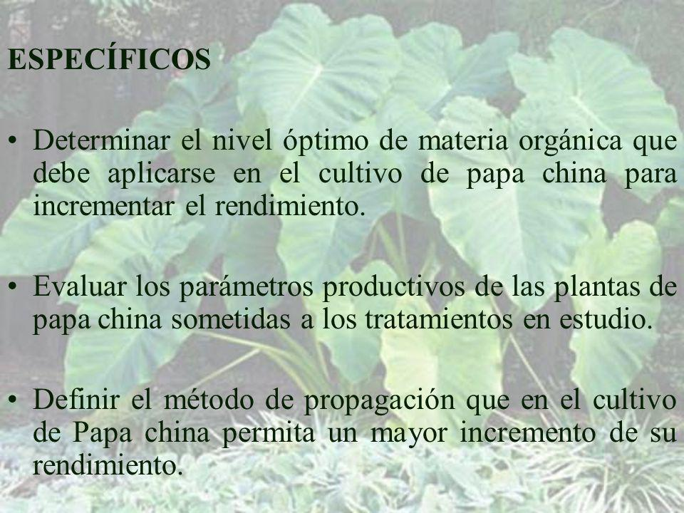 ESPECÍFICOS Determinar el nivel óptimo de materia orgánica que debe aplicarse en el cultivo de papa china para incrementar el rendimiento.