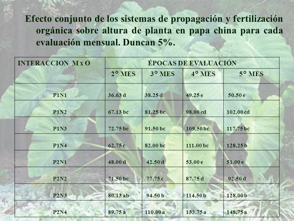 Efecto conjunto de los sistemas de propagación y fertilización orgánica sobre altura de planta en papa china para cada evaluación mensual. Duncan 5%.