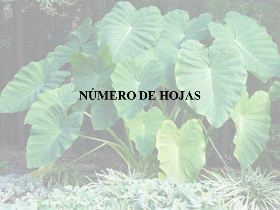 NÚMERO DE HOJAS