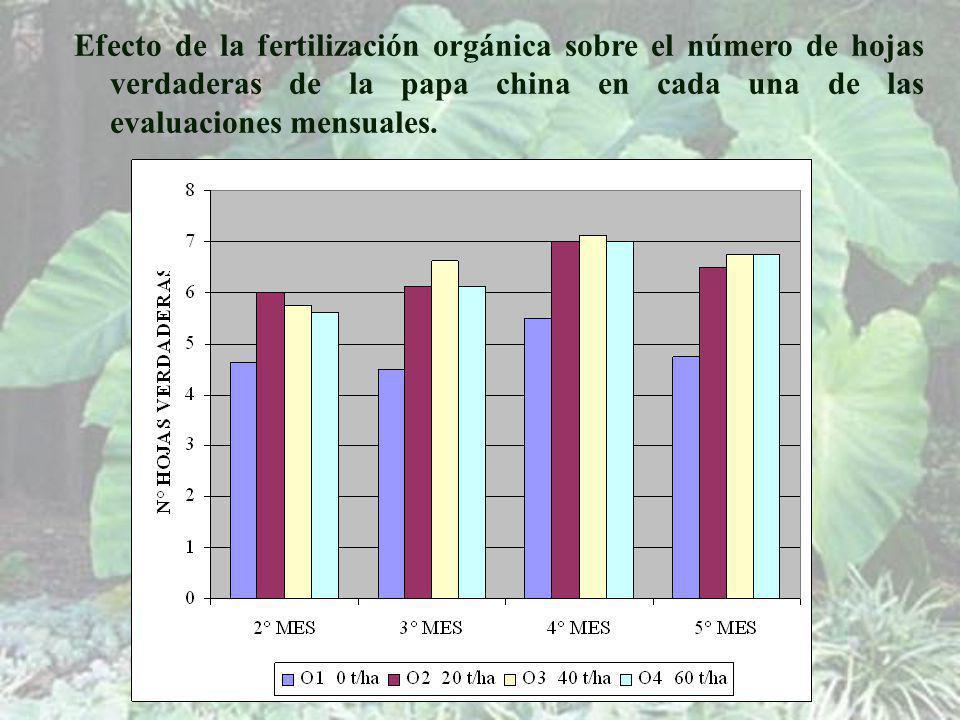 Efecto de la fertilización orgánica sobre el número de hojas verdaderas de la papa china en cada una de las evaluaciones mensuales.