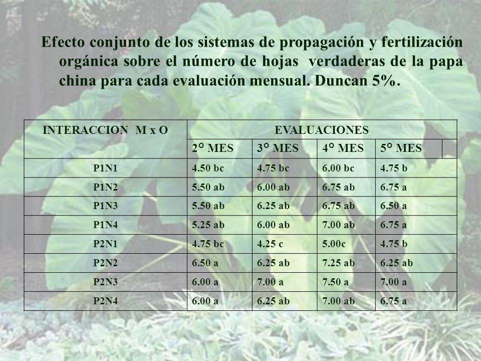 Efecto conjunto de los sistemas de propagación y fertilización orgánica sobre el número de hojas verdaderas de la papa china para cada evaluación mensual. Duncan 5%.