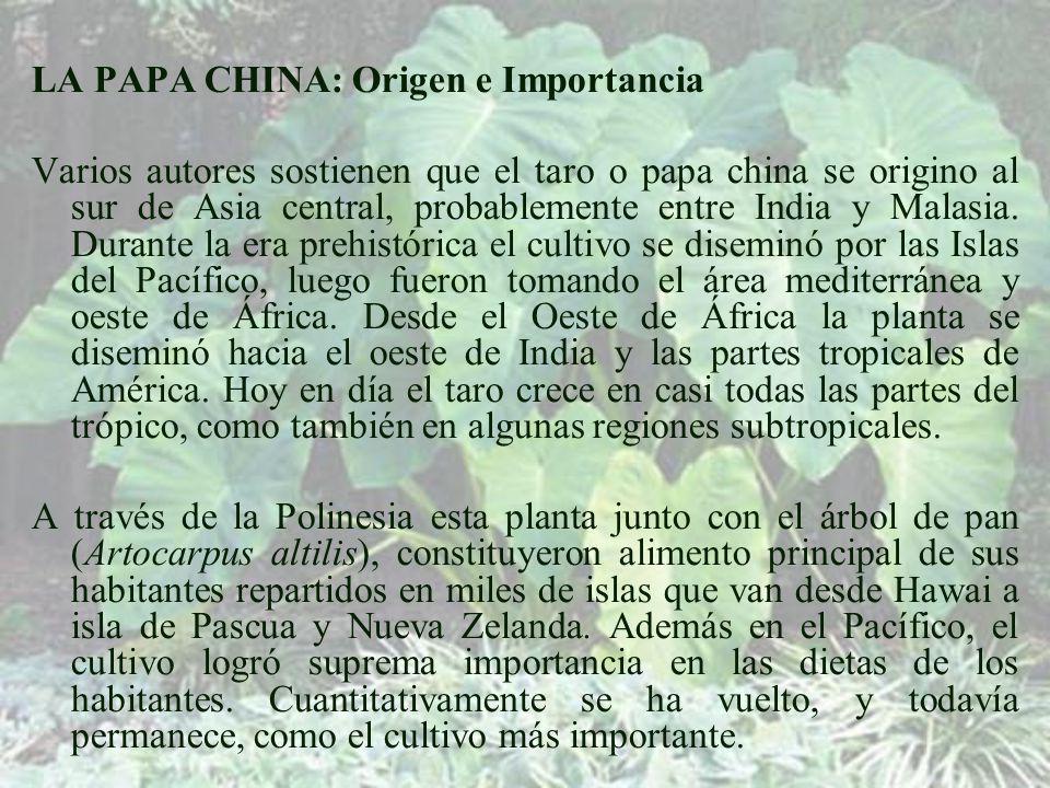 LA PAPA CHINA: Origen e Importancia