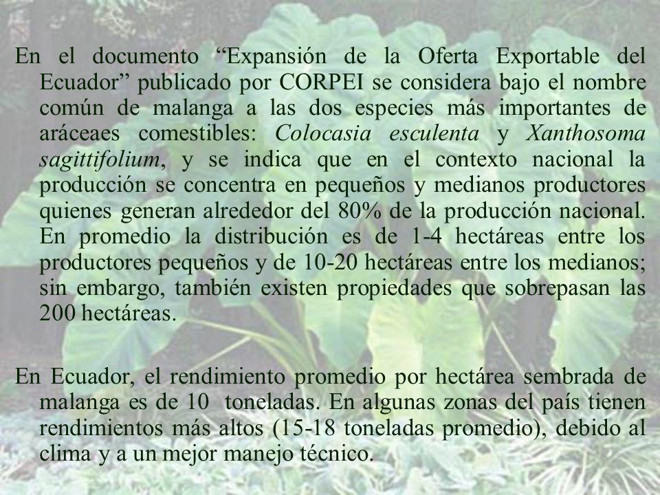 En el documento Expansión de la Oferta Exportable del Ecuador publicado por CORPEI se considera bajo el nombre común de malanga a las dos especies más importantes de aráceaes comestibles: Colocasia esculenta y Xanthosoma sagittifolium, y se indica que en el contexto nacional la producción se concentra en pequeños y medianos productores quienes generan alrededor del 80% de la producción nacional. En promedio la distribución es de 1-4 hectáreas entre los productores pequeños y de 10-20 hectáreas entre los medianos; sin embargo, también existen propiedades que sobrepasan las 200 hectáreas.