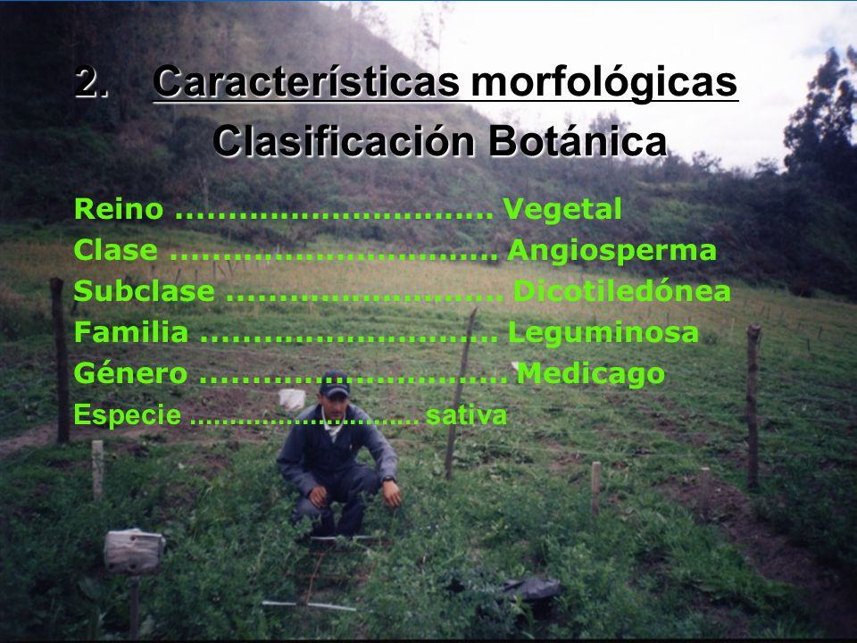 Características morfológicas Clasificación Botánica