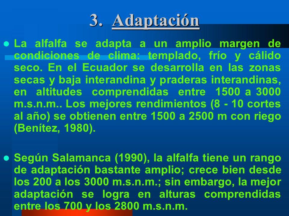 3. Adaptación