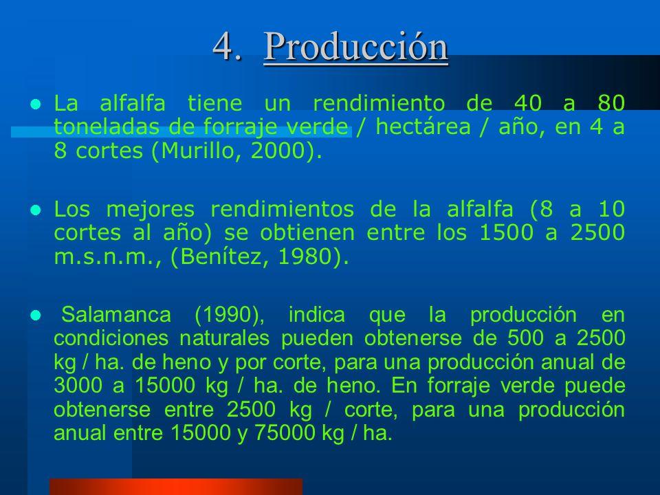 4. Producción La alfalfa tiene un rendimiento de 40 a 80 toneladas de forraje verde / hectárea / año, en 4 a 8 cortes (Murillo, 2000).