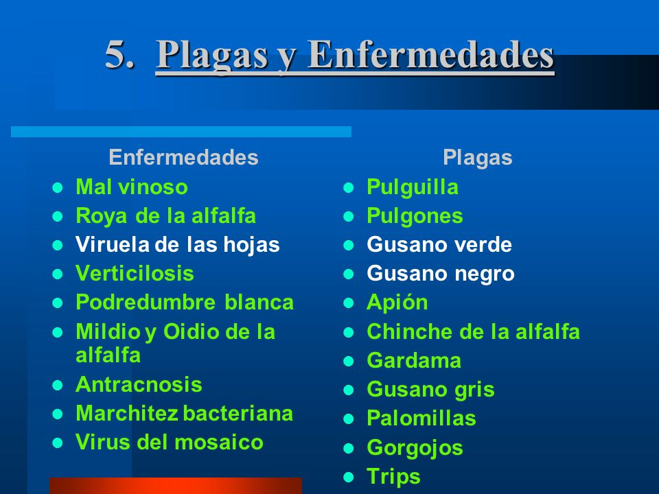 5. Plagas y Enfermedades Enfermedades Mal vinoso Roya de la alfalfa