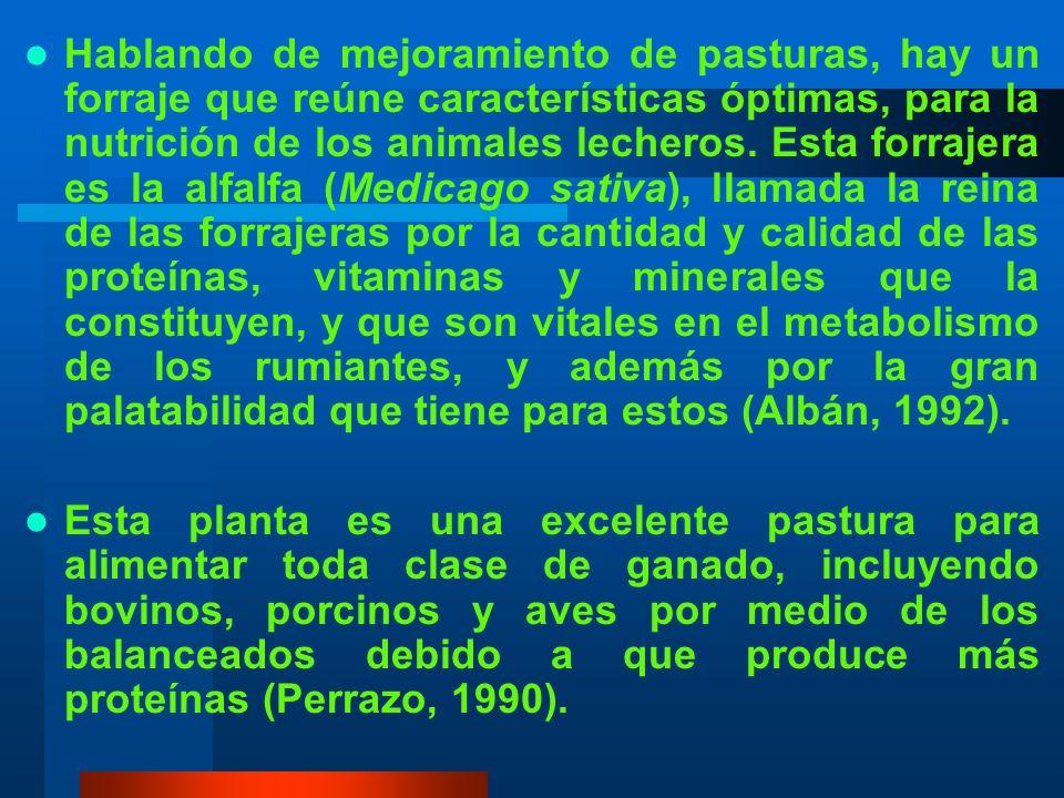 Hablando de mejoramiento de pasturas, hay un forraje que reúne características óptimas, para la nutrición de los animales lecheros. Esta forrajera es la alfalfa (Medicago sativa), llamada la reina de las forrajeras por la cantidad y calidad de las proteínas, vitaminas y minerales que la constituyen, y que son vitales en el metabolismo de los rumiantes, y además por la gran palatabilidad que tiene para estos (Albán, 1992).