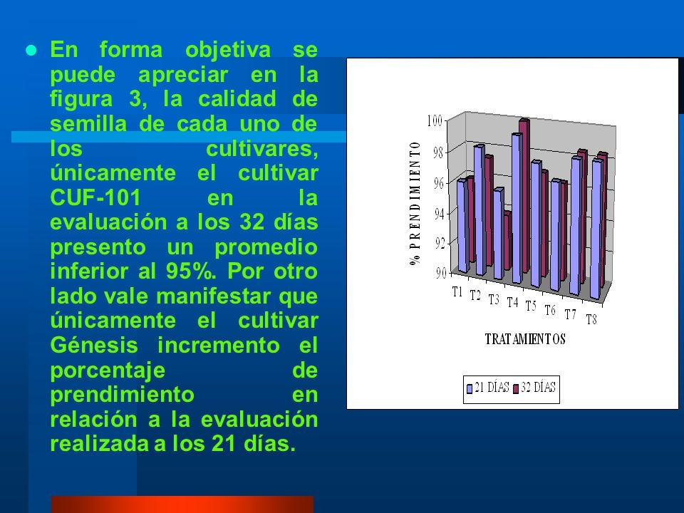 En forma objetiva se puede apreciar en la figura 3, la calidad de semilla de cada uno de los cultivares, únicamente el cultivar CUF-101 en la evaluación a los 32 días presento un promedio inferior al 95%.