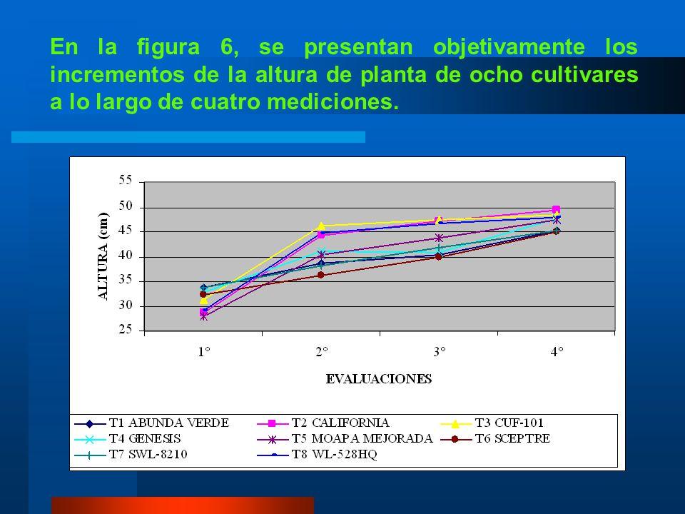En la figura 6, se presentan objetivamente los incrementos de la altura de planta de ocho cultivares a lo largo de cuatro mediciones.