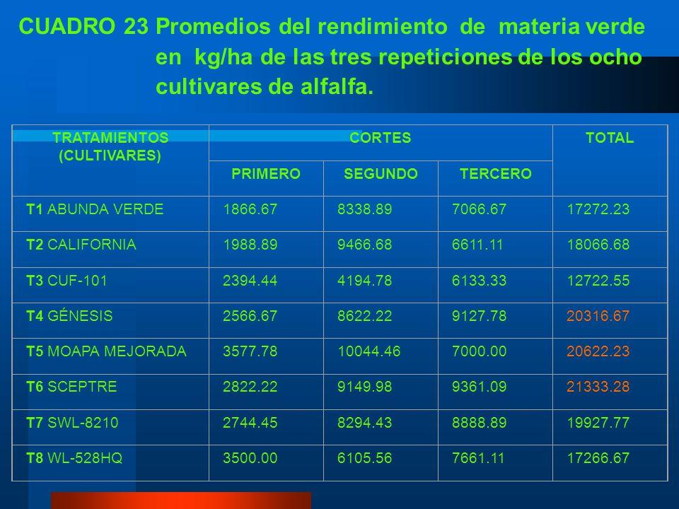 CUADRO 23 Promedios del rendimiento de materia verde