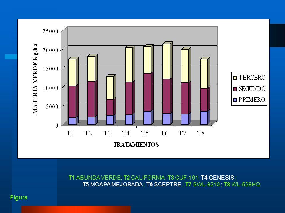 T1 ABUNDA VERDE; T2 CALIFORNIA; T3 CUF-101; T4 GENESIS ;