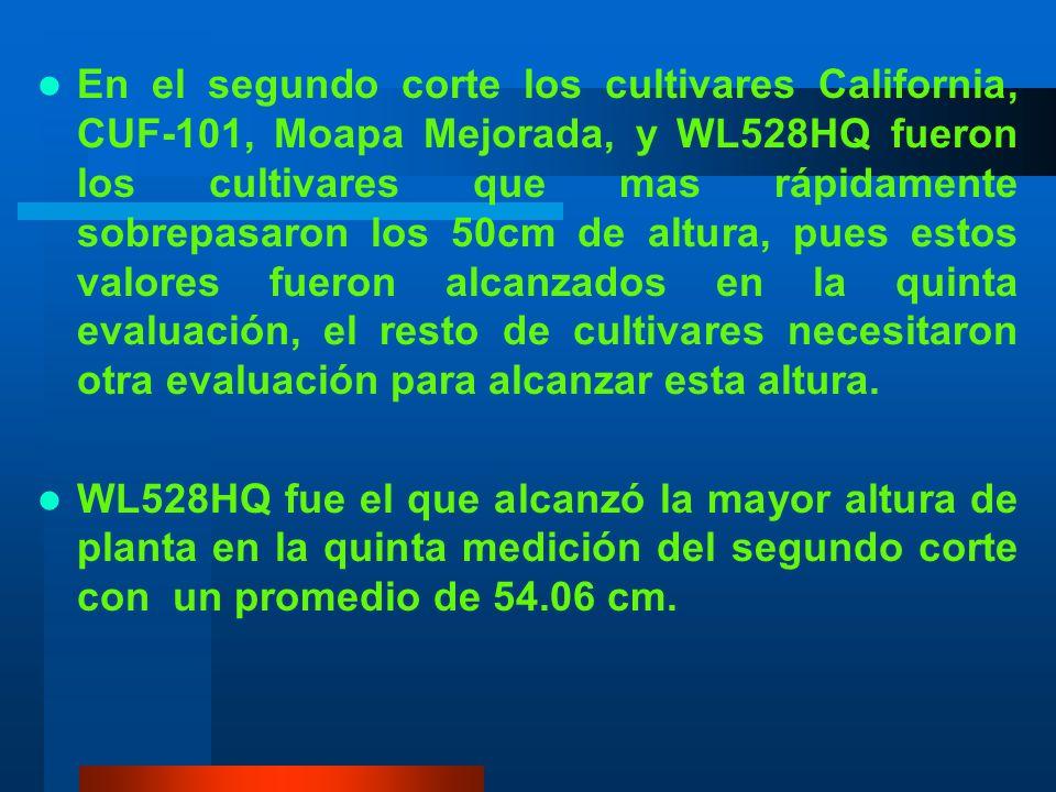 En el segundo corte los cultivares California, CUF-101, Moapa Mejorada, y WL528HQ fueron los cultivares que mas rápidamente sobrepasaron los 50cm de altura, pues estos valores fueron alcanzados en la quinta evaluación, el resto de cultivares necesitaron otra evaluación para alcanzar esta altura.