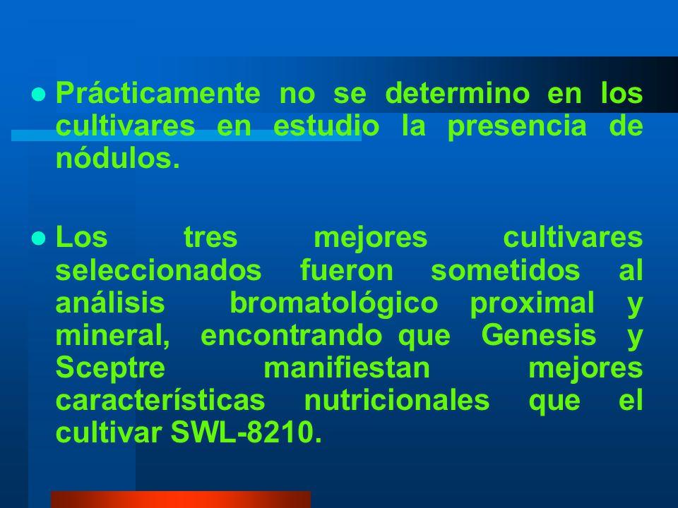 Prácticamente no se determino en los cultivares en estudio la presencia de nódulos.