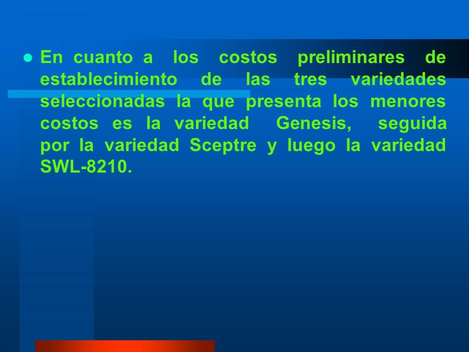 En cuanto a los costos preliminares de establecimiento de las tres variedades seleccionadas la que presenta los menores costos es la variedad Genesis, seguida por la variedad Sceptre y luego la variedad SWL-8210.
