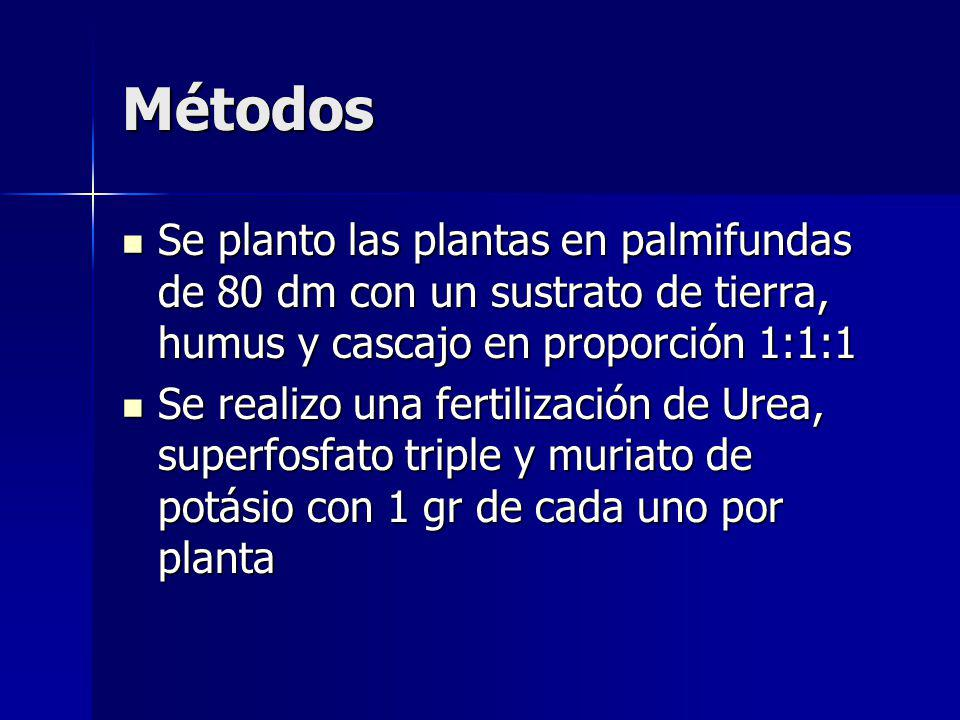 Métodos Se planto las plantas en palmifundas de 80 dm con un sustrato de tierra, humus y cascajo en proporción 1:1:1.