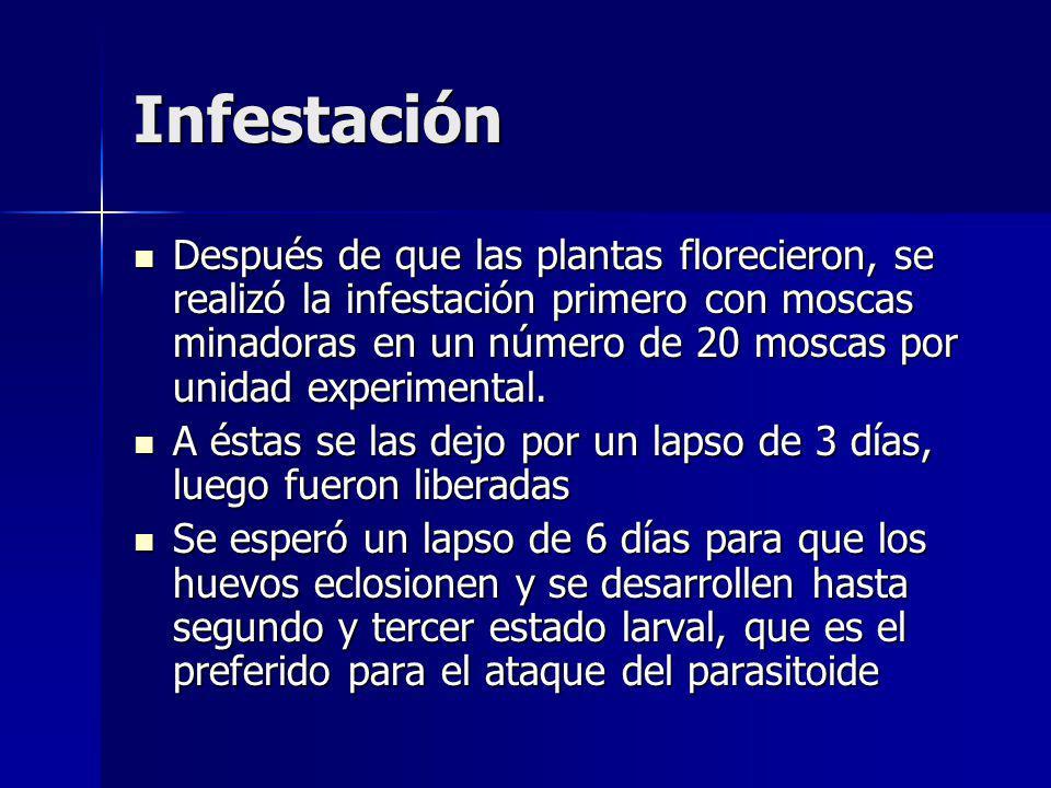 Infestación
