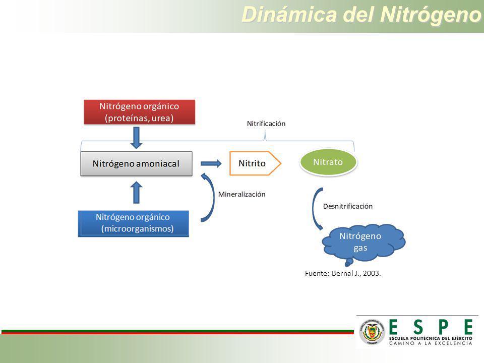 Dinámica del Nitrógeno