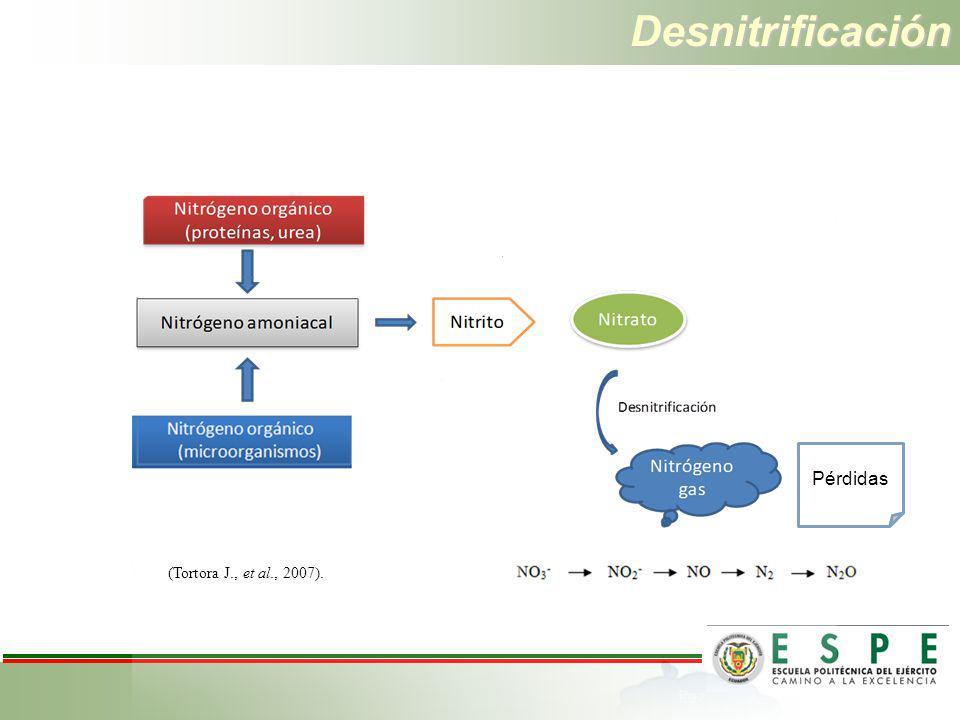 Desnitrificación Pérdidas (Tortora J., et al., 2007).