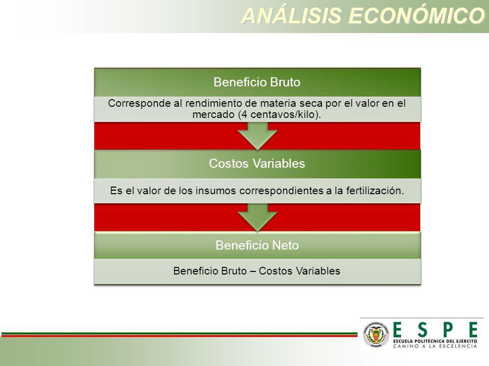 ANÁLISIS ECONÓMICO Beneficio Bruto