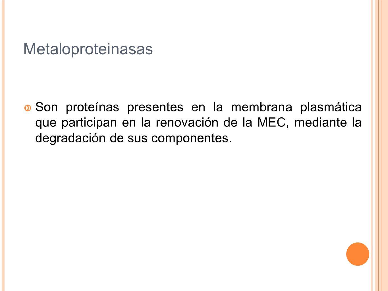 Metaloproteinasas