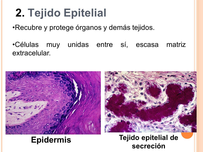 Tejido epitelial de secreción