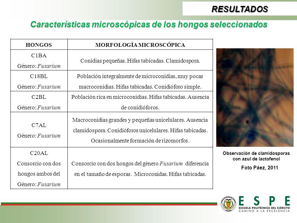 Características microscópicas de los hongos seleccionados