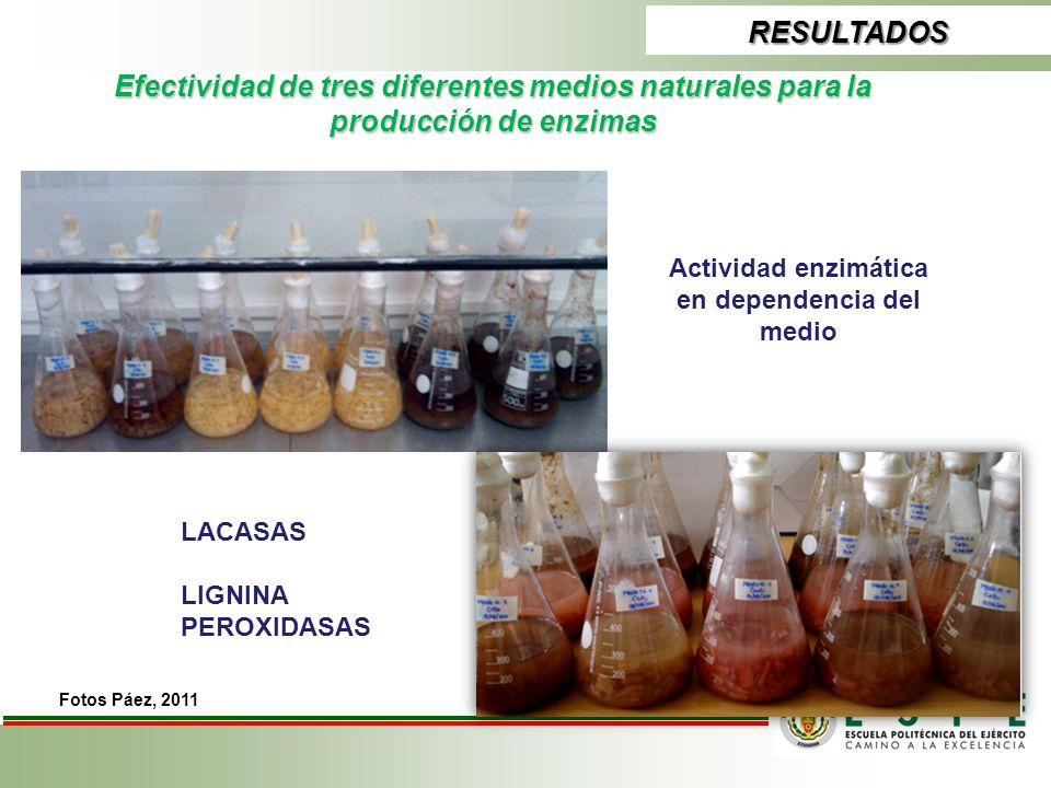 Actividad enzimática en dependencia del medio