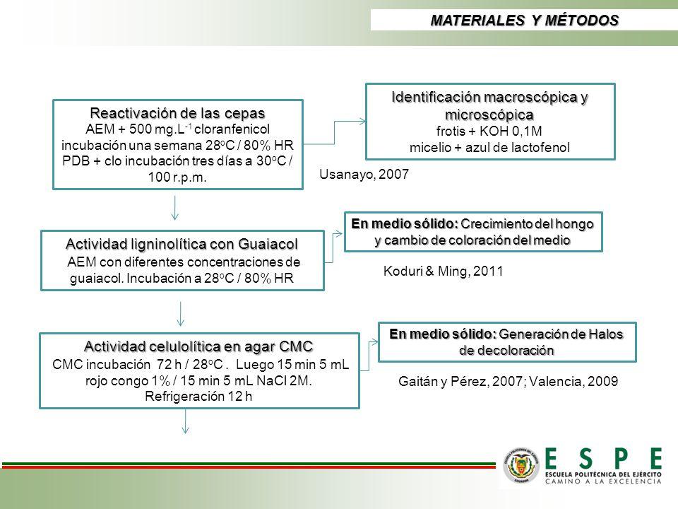 Identificación macroscópica y microscópica Reactivación de las cepas