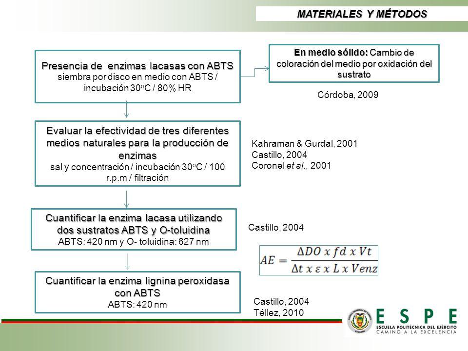 Presencia de enzimas lacasas con ABTS